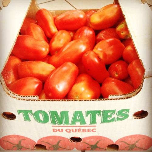 20 lbs de tomates