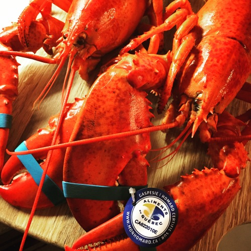 homard gaspésien 2015