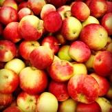pommes harnois