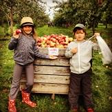 les savard aux pommes